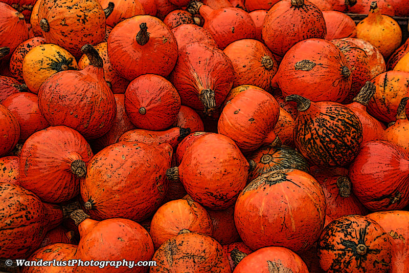 photo of Gourds, Seegraben, Switzerland