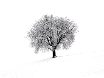 Winter photography gallery icon